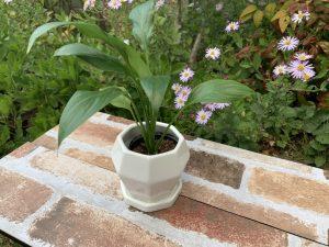 白い植木鉢メルヴィー