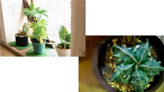 植木鉢サイズ下部画像