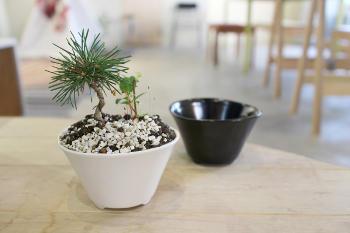 植木鉢の大きさの長所と短所