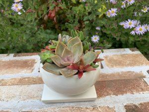 ホワイト丸型陶器製植木鉢リヴィラ