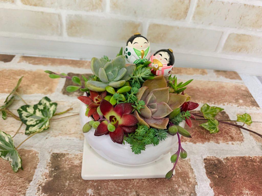 陶器製植木鉢に多肉植物と雛人形ピック