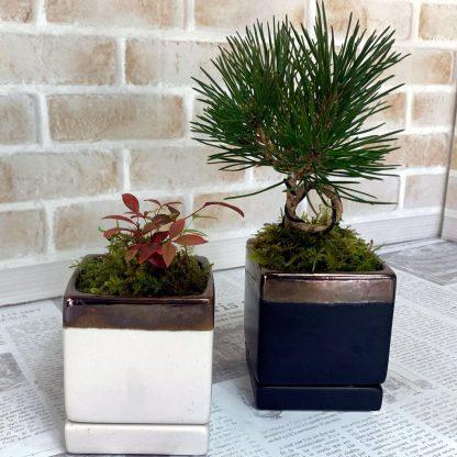 スクエア型植木鉢の誉