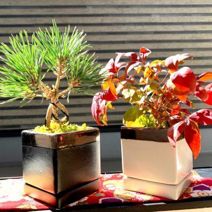 四角型植木鉢の誉と観葉植物