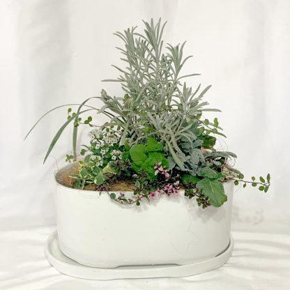 寄せ植えにピッタリな植木鉢ラドミラ