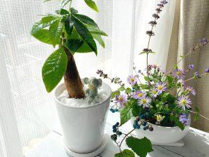 瑠璃色に輝く野葡萄と白い植木鉢