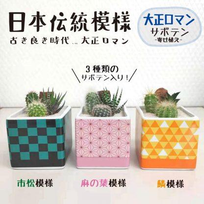 多肉四角藤の花、着物柄、市松模様の植木鉢