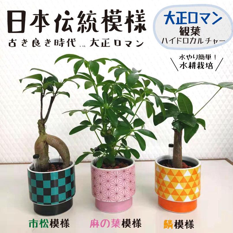 観葉植物藤の花、着物柄、市松模様の丸型植木鉢