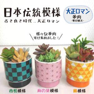 多肉植物丸形植木鉢鬼滅の刃藤の花、着物柄、市松模様