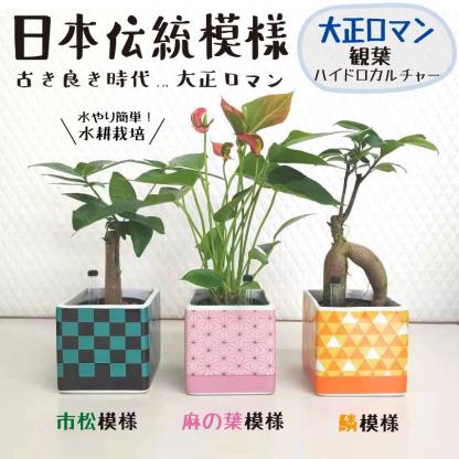 観葉大正ロマン(四角)多肉四角鬼滅の刃採用藤の花、着物柄、市松模様の植木鉢