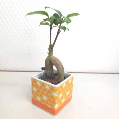 観葉植物鬼滅の刃鱗模様の正方形植木鉢