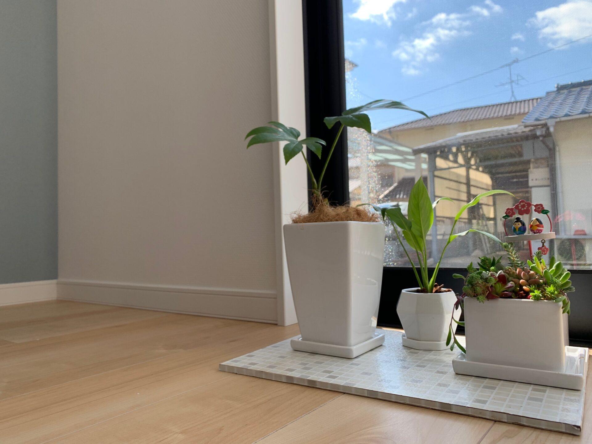 インテリアの飾り植木鉢