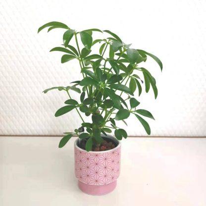 観葉植物麻の葉柄の丸型植木鉢