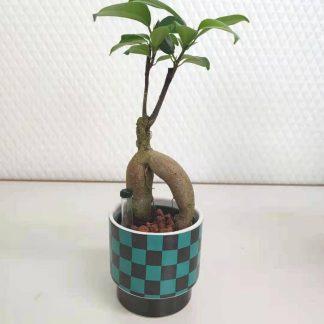 観葉植物鬼滅の刃鱗柄の丸型植木鉢