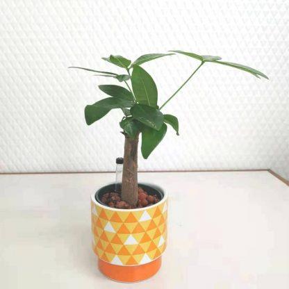 観葉植物鱗柄の丸型植木鉢