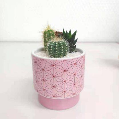 サボテン鬼滅の刃麻の葉模様の丸型植木鉢