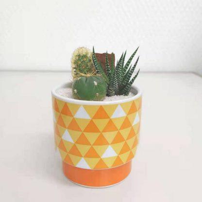 サボテン鬼滅の刃鱗柄の丸型植木鉢