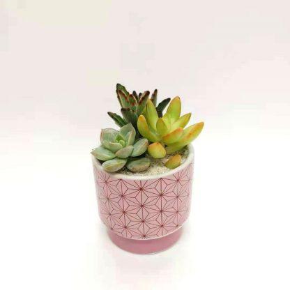 多肉植物と麻の葉模様の丸型植木鉢