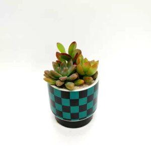 多肉植物と鬼滅の刃市松模様の丸型植木鉢