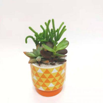 多肉植物と鱗柄の丸型植木鉢
