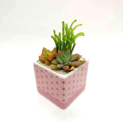 多肉植物麻の葉柄植木鉢