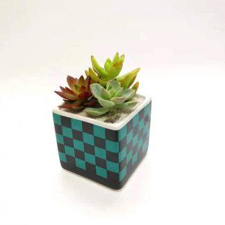 多肉植物市松柄の植木鉢
