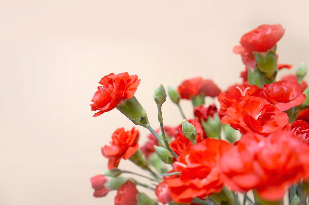 カーネーションと花言葉