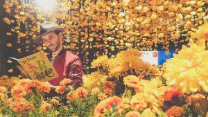 父の日お父さん黄色イエローの花を贈るプレゼント何故、由来