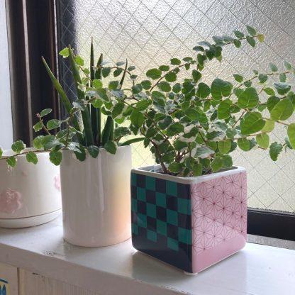 インテリアおすすめアニメグッツ観葉植物お家花台所お部屋ガーデニング